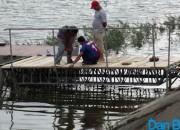 Ponton pe Lacul Bacău II