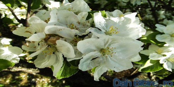 frumusetile moldave