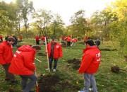 Tinerii Social Democrați au plantat copăcei de 1 mai