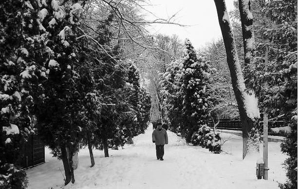 Parcul Cancicov, Bacau
